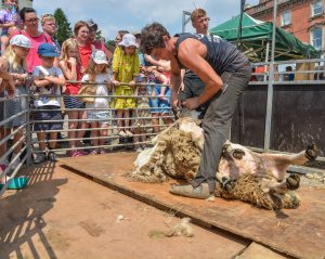 Children watching shearing demo