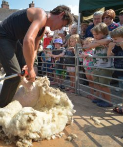 More shearing with onlooking children