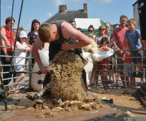 Shearing underway