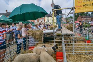 Sheep Talk Underway with James Metcalfe