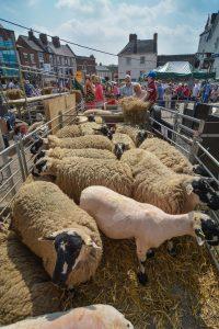 The Shearing Pen